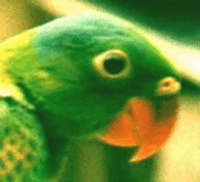 Parrot's ProZ.com profile photo