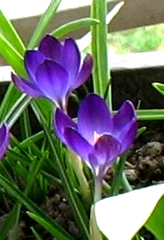 I. Stojanovska's ProZ.com profile photo